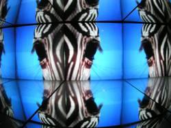 A, B, Zebra