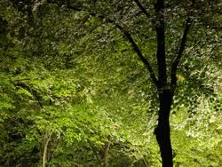 nächtliche Photosynthese