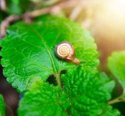 small snail on a green leaf