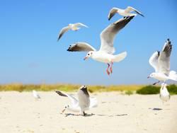 white seagulls on the beach