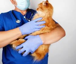 vet in blue uniform and latex gloves