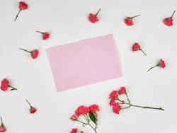 empty pink sheet of paper and buds of pink rose