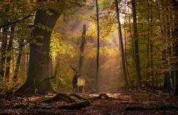 Hirsch auf der Lichtung