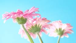 Blumengruß