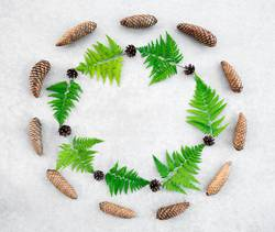 Round frame made of conifer cones and wild forest fern