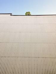 Baum auf Wand