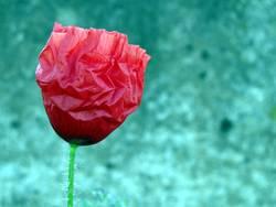 208 Tage photocase- mein erstes Blumenbild