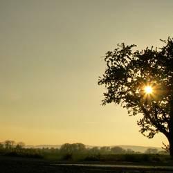 und noch'n Baum ....