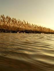 Goldenes  Meer II