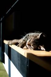 Tut mir leid, Lili - nur 'n Katzenfoto