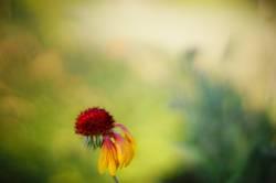 floraler skalp