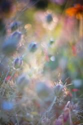 glücklich | florales glitzern...