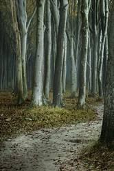 der wald und die bäume...