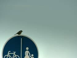 vogel auf verkehrsschild - entscheidungsnot