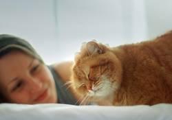 Chillen mit Katze auf dem Bett