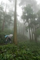 Zwei Männer mit Schirmen, viel Grün, ein Wald, Nebel