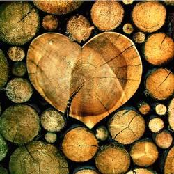 Holz ist...