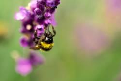 Alle Bienchen sind schon da