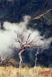 Geisterbaum