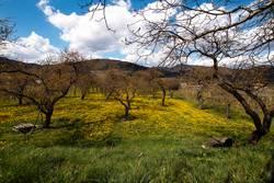 Obstplantage im Frühling