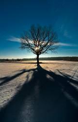 Winterlandschaft mit Baum im Gegenlicht