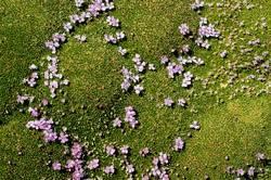 Flowerbed [4]
