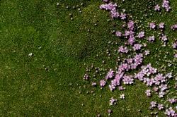 Flowerbed [3]
