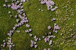 Flowerbed [2]