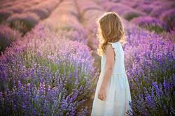 Lavendel goldenes Licht abgelegt