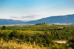 Feld des zukünftigen Weins