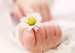 Babyhand mit Gänseblümchen
