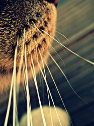schnurrige haare
