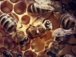 Bienenbeginn