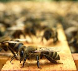 soo muss Biene!