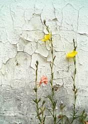 Blümchen vor bröckeliger Wand