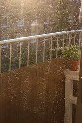 Goldener Sommerregen