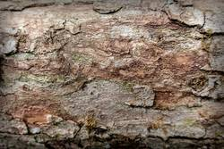 Wooden textured surface