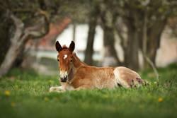 brown foal standing on meadow