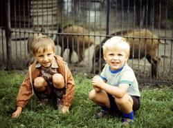 Zwei wilde Schweine