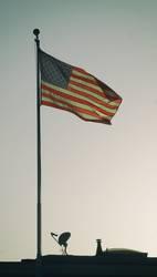 1) God bless America (aber bitte schnell)