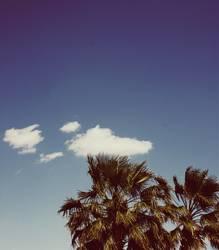 Wolke küsst Baumkrone