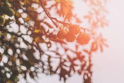 Herbstgelumpe