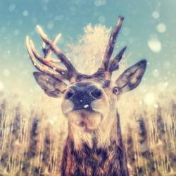 Portrait of a deer with snowflakes