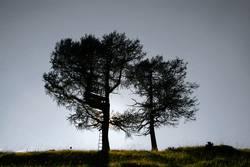 Zwei Bäume vor der Sonne