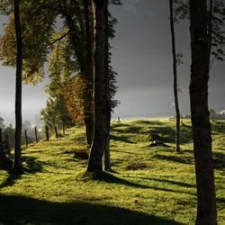 Vor lauter Bäumen