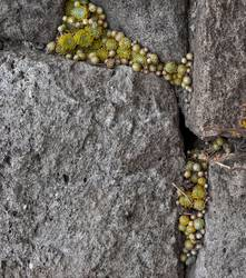 Gefüllter Fels nach Art des Hauses