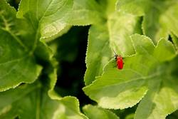 red bug/green leaves