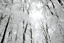 Winter, verschneite Bäume