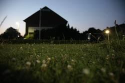 undergrass