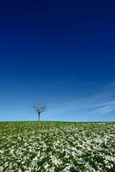 Einsame Weite in grün/blau